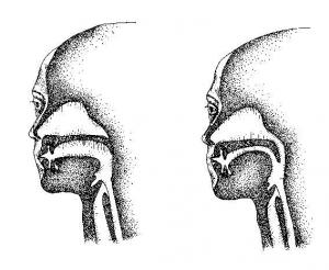 Difference between breathing through your mouth and nose.